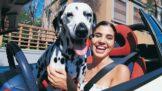 Začal váš pes divně páchnout? Na vině mohou být zdravotní problémy