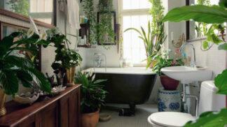 6 rostlin, které efektivně odstraní toxiny z koupelny