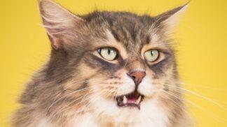 """Torontský fotograf pořizuje snímky baculatých koček. """"Někdy je to peklo,"""" přiznává"""