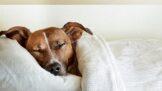7 důvodů, proč je dobré nechat psa spát v posteli