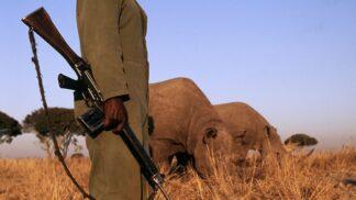 Aby ochránili nosorožce, mají zaměstnanci tohoto parku povolení zabíjet lidi