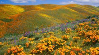 15 fotek nekonečných květinových polí, protože jaro nepočká