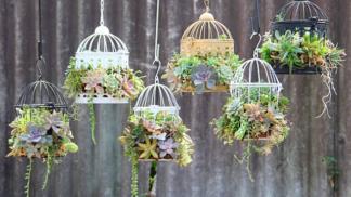 Cizokrajní ptáci? Ne, kaktusy v ptačích klecích jako nový trend!