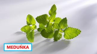 12 rostlin, které přirozeně odpuzují komáry