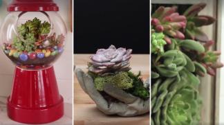 Módní přehlídka sukulentů: 3 úchvatné způsoby, jak je pěstovat!