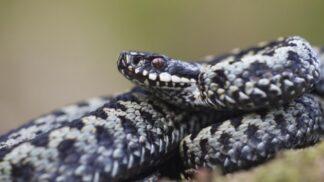 Odborníci na plazy: Co dělat, když na dovolené potkáte hada