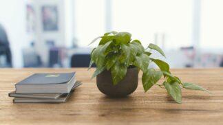 4 nejčastější důvody, proč vám umírají pokojové rostliny (a jak je vzpružit)