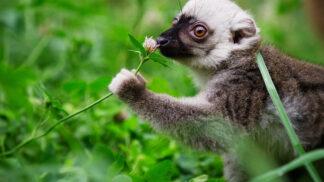 Příroda nikdy nespí: Objevte tajemství nočního života při netradičních procházkách po pražské zoo
