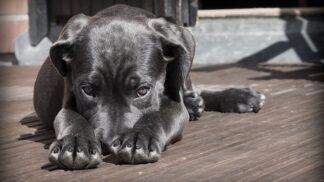 Nekřičte na psa. Vystavujete ho obrovskému stresu, zjistili vědci