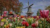 Thumbnail # Tip na výlet: Květinový park plný tulipánů otevřel své brány, ta krása vám vyrazí dech