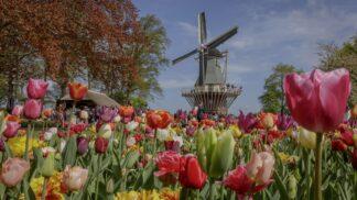 Tip na výlet: Květinový park plný tulipánů otevřel své brány, ta krása vám vyrazí dech