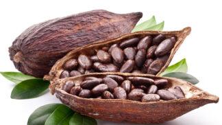 Kakaové boby: Proč patří mezi nejkomplexnější potraviny planety?