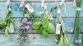 Thumbnail # Dubnové bylinky: Sedmikráska na hnisavé záněty nebo petrklíč na nemoci dýchacích cest