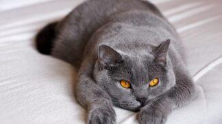 Vůně prozradí chorobu: Kočky například poznají Parkinsona, který trápí i herečku Janu Hlaváčovou