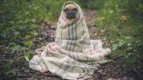 Babské rady, jak léčit domácí mazlíčky: Kdy jim pomohou bylinky