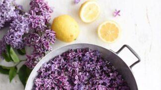 Vyrobte si šeříkový sirup: Voňavou domácí limonádu pak můžete popíjet celé léto