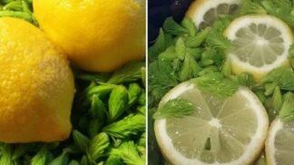 Vyrobte si léčivý smrkový sirup: Poradí si s nachlazením, uleví při rýmě i kašli a posílí imunitu # Thumbnail