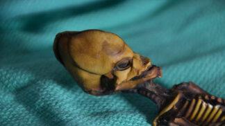 """Záhadné tělíčko z Atacamy: Poznejte skutečný původ kostry """"mimozemšťana"""""""