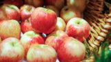 Jedno na štrúdl, druhé na mošt: Vyznejte se v jablkách!