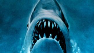 Máme se na dovolené bát útoku žraloka?