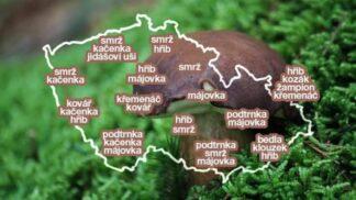 Plné košíky hub: Mapa oblastí, kde najdete především babky a hříbky