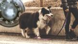 Thumbnail # HOROSKOP DOMÁCÍCH MAZLÍČKŮ: Proč Kozorozi milují vodní živočichy a co vadí Beranům na psech?