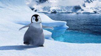 Animovaný rodinný film Happy Feet: Za první víkend vydělal 45,5 milionu dolarů, tanečníci absolvovali školu pohybu tučňáků