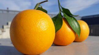 Thumbnail # Vyznejte se v pomerančích: K čemu se hodí a jak je v obchodě vybírat