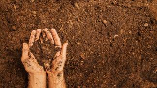 Praha spouští projekt ekologického zemědělství: Pole bez pesticidů, chemie a hnojiv