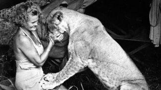 Thumbnail # Vychovala lvici Elsu, s muži se ale Joy Adamsonová nepárala. Jednoho opustila na lodi