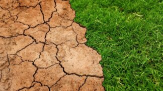 Sucho v Česku ničí zemědělce: Jaká odvětví však vzkvétají? # Thumbnail
