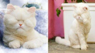 Thumbnail # Příběh s dobrým koncem. Snímky zachráněné kočky Moet dojímají svět a pomáhají zvířatům