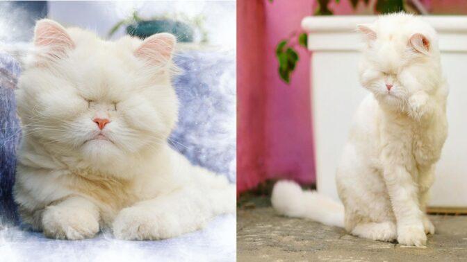 Příběh s dobrým koncem. Snímky zachráněné kočky Moet dojímají svět a pomáhají zvířatům