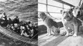 Do člunů jen ženy a děti, znělo z potápějícího se Titanicu. Nakonec tam byli i tři psi miliardářů