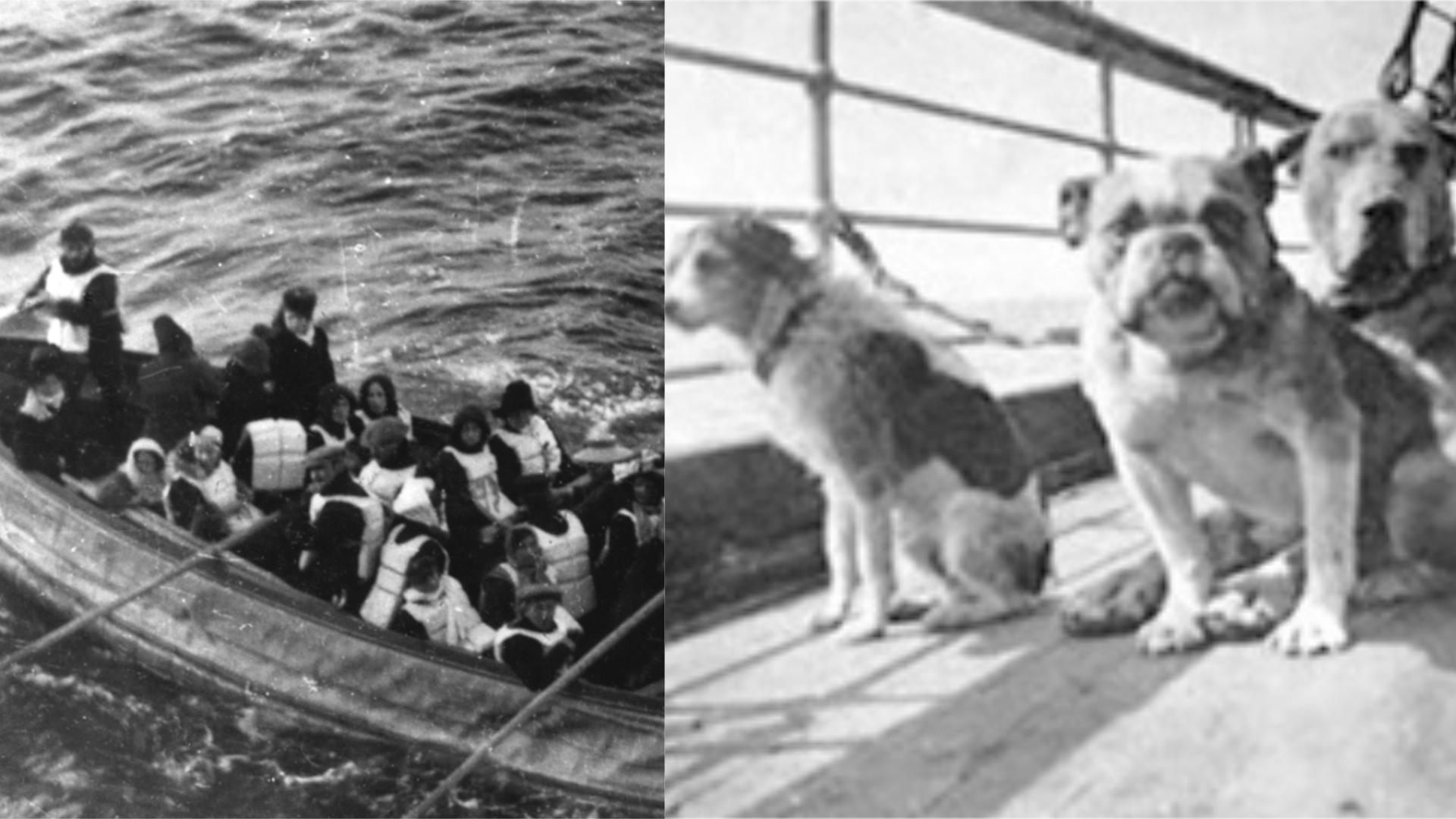 Thumbnail # Do člunů jen ženy a děti, znělo z potápějícího se Titanicu. Nakonec tam byli i tři psi miliardářů