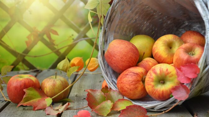 Hra o jablko: Proč jsou česká jablka zdravější a chutnější?