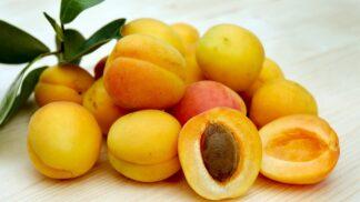 Sezóna zdravých meruněk: Důvody, proč je pěstovat a jíst co nejčastěji
