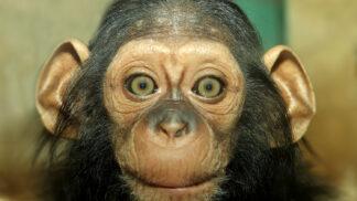 Zoo Plzeň má i letos vzácné přírůstky. Jaké zvíře nejvíc láká návštěvníky?