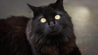 Dvacet nejzajímavějších pověr: Od černé kočky až po bílého motýla. Znáte je všechny?