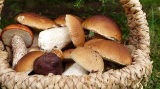 Výbava správné houbařky: V čem je nejlepší vyrazit a na co nikdy nezapomenout?