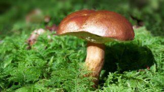 Tradiční houbové pochoutky podle našich babiček: Vyzkoušejte kulajdu, hubník a kubu