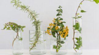 Nejjednodušší domácí pěstování: Díky hydroponii už nemusíte květiny zalévat
