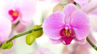 Chcete orchideje jako v botanické? Zkuste těchto pět tipů a nádhera vás nemine