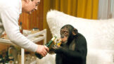 Hop – a je tu lidoop: Napadení skutečnou opicí, drsná nakládačka a další zajímavosti o skvělé komedii