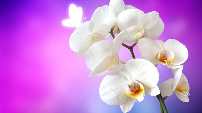 Orchideje, nádherné moderní pokojovky: Jak se o ně starat, aby kvetly znovu a znovu?