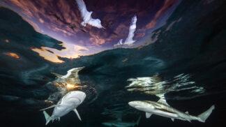 Žraločí tornádo, potopená loď smrti: Tohle jsou nejlepší podmořské fotky roku 2021