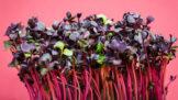 Mikrozelenina: Vitamínová bomba, kterou zvládnete vypěstovat i na parapetu