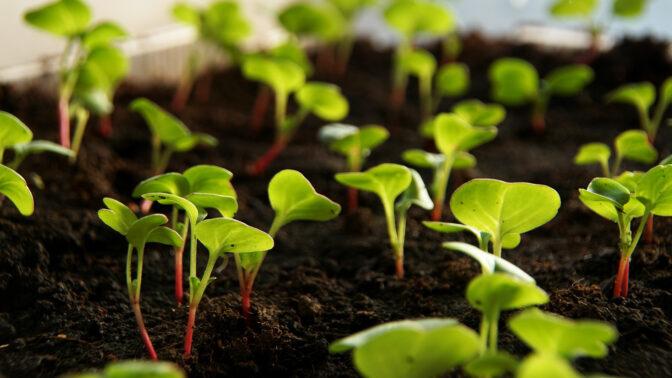 Zahradnický rok začíná, rané ředkvičky a karotku můžete vysévat už koncem února