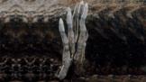 Prsty mrtvého muže: Děsivá houba roste i v Česku, lidé si ji pletou s nebožtíkem