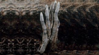 Prsty mrtvého muže: Nejděsivější houba roste i v Česku, lidé si ji pletou s nebožtíkem